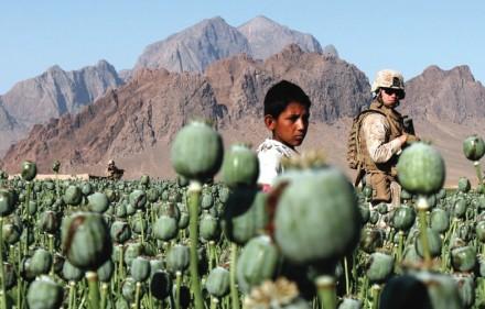 poppy-field-afghanistan