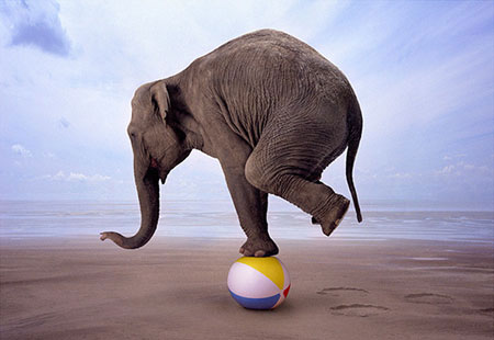 slon balansira na jednoj nozi