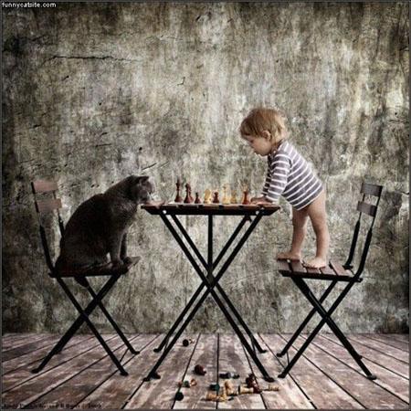Foto: Funnycatsite.com