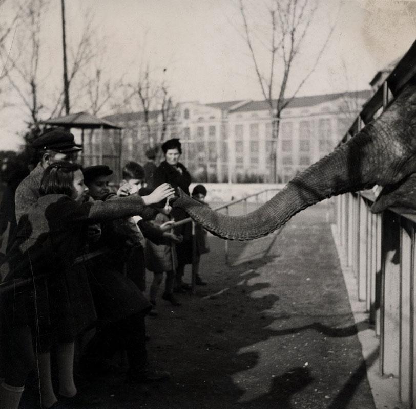 Zoološki vrt pre rata