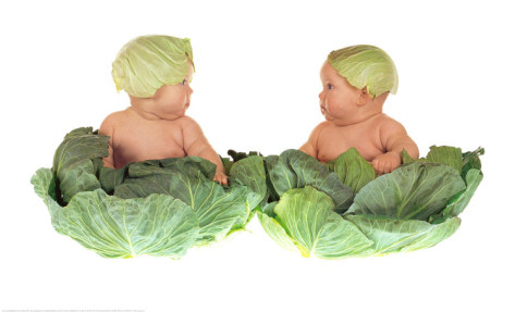 Anne Geddes, Cabbage kids
