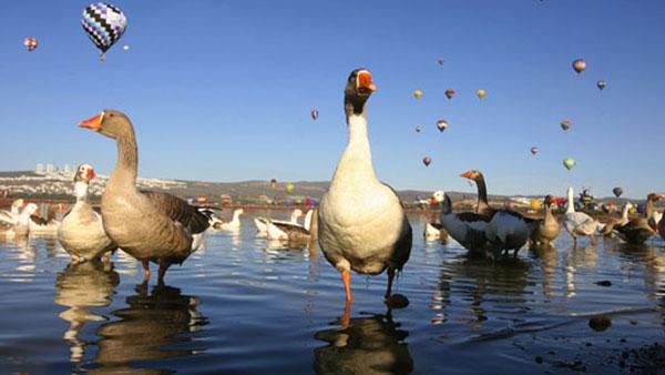 patke