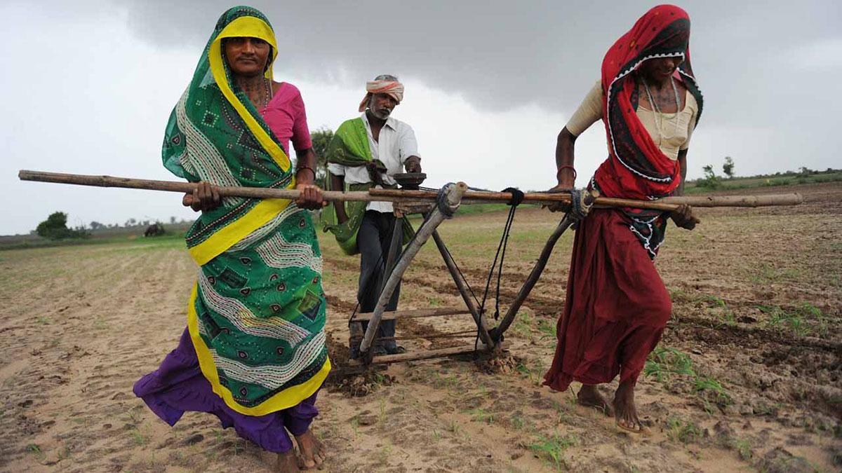 Žene rade u polju, Indija