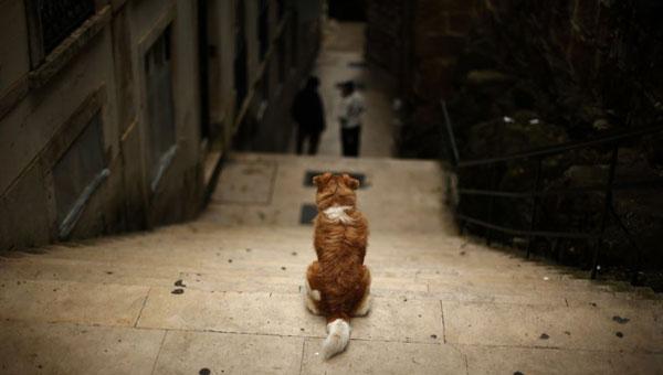 mali žuti pas sedi na vrhu stepeništa u Lisabonu