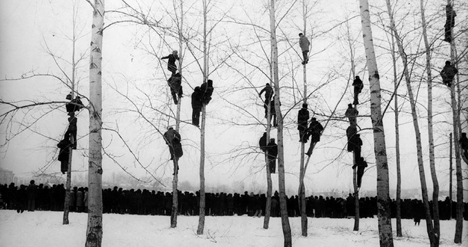 People in Trees, Mikola Gnisyuk