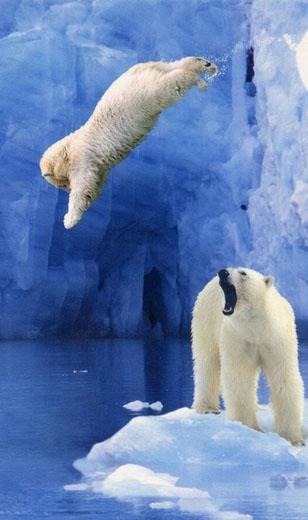 Rebel polar bear cub http://bit.ly/1q6bJXP