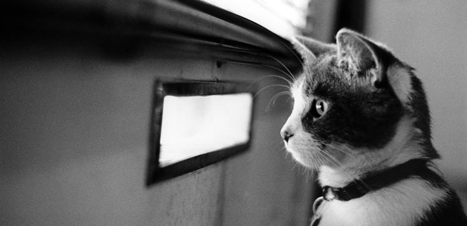 Waiting Cat http://bit.ly/1t8KZdf