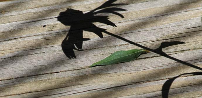 senka palminog drva i zeleni list