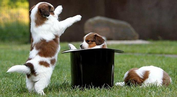 Puppy DOg Magic Tricks