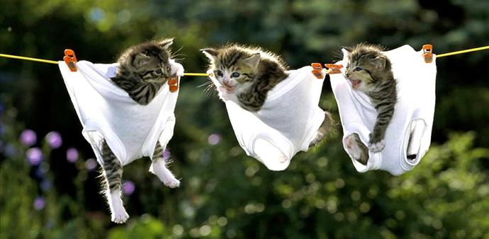 Emergency kittens http://goo.gl/kDTg1M