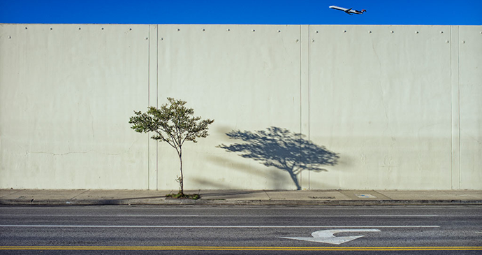 Tree, shadow and plane by Jeff Seltzer