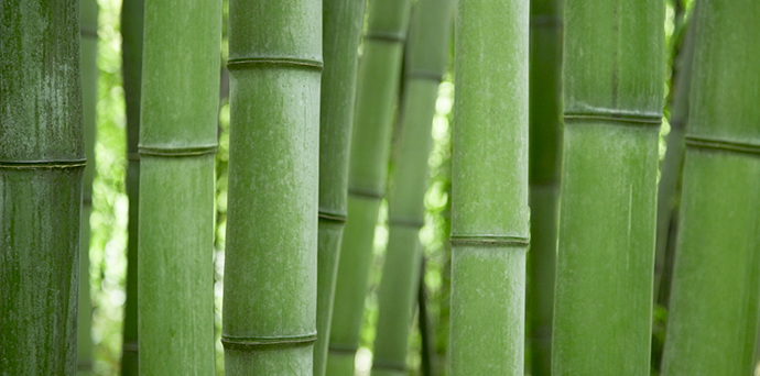 Bambus http://goo.gl/nqiJwV