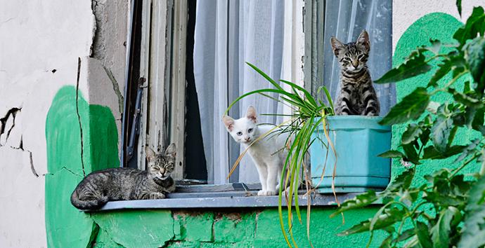 Fotografije čitateljki, Emilija Vidanović