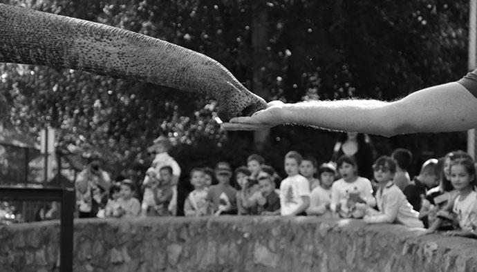 Fotografije čitateljki, Ivana Karić, Zabranjeno hraniti životinje