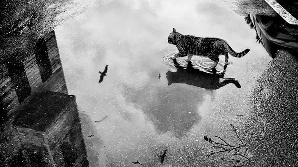Posle kiše, foto: Ümran İnceoğlu