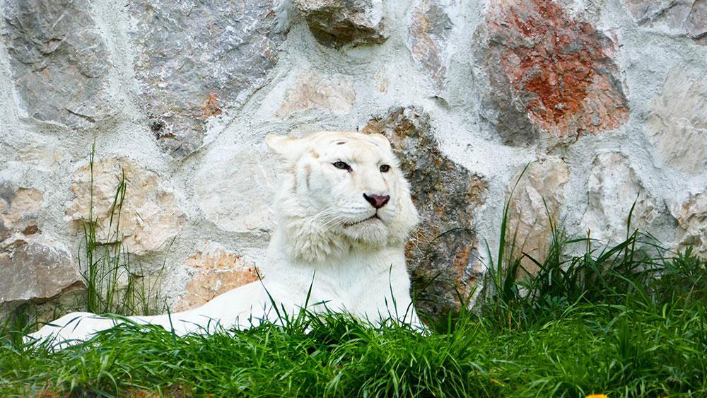 Fotografije čitalaca, Rade Vilimonović, Belgrade Zoo