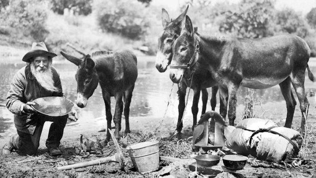 Zlatna groznica, Kalifornija, 19. vek