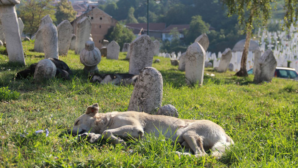 Bosnia © Susan Aksu Movsesian and Adrift Anywhere, 2014-2015