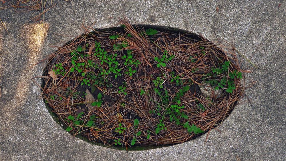 trava raste iz rupe u betonu