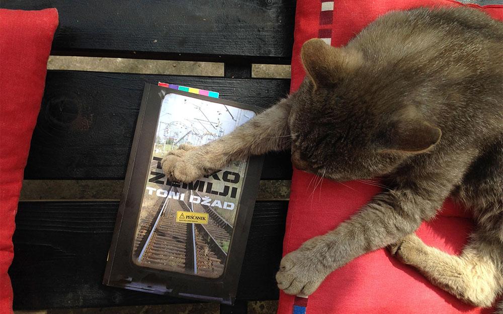 Toni & Marko mačak, fotografije čitateljki, Mina Milenković