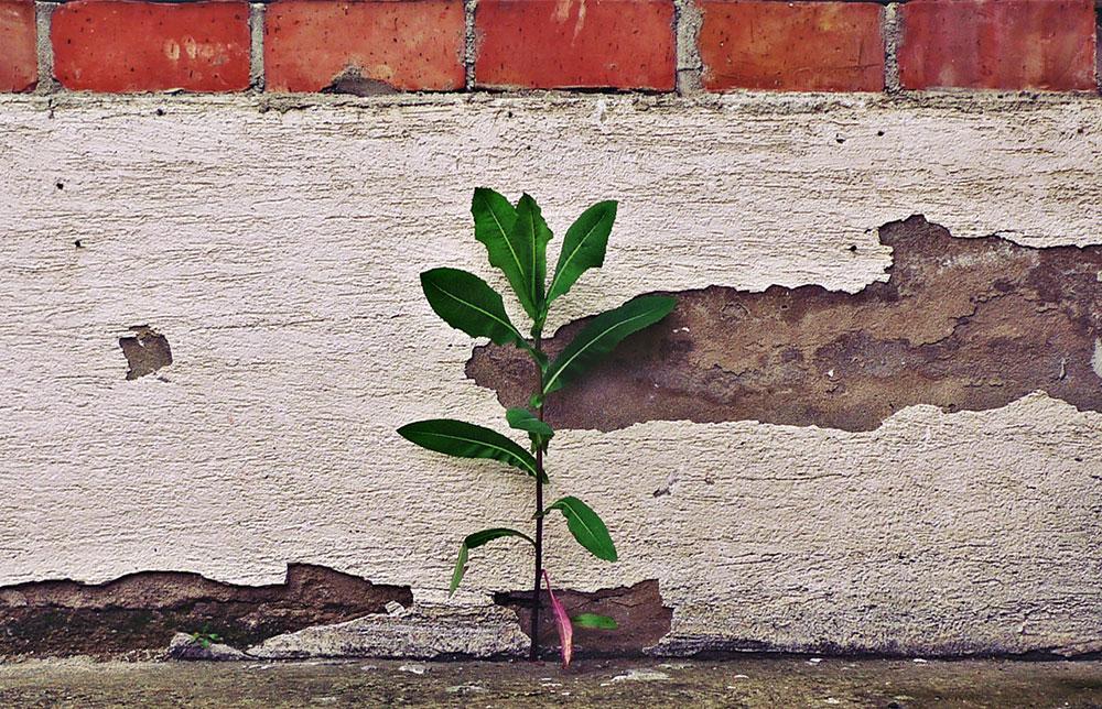 biljka iznikla iz zida