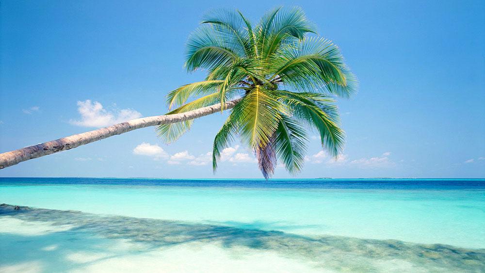 Tropska fantazija