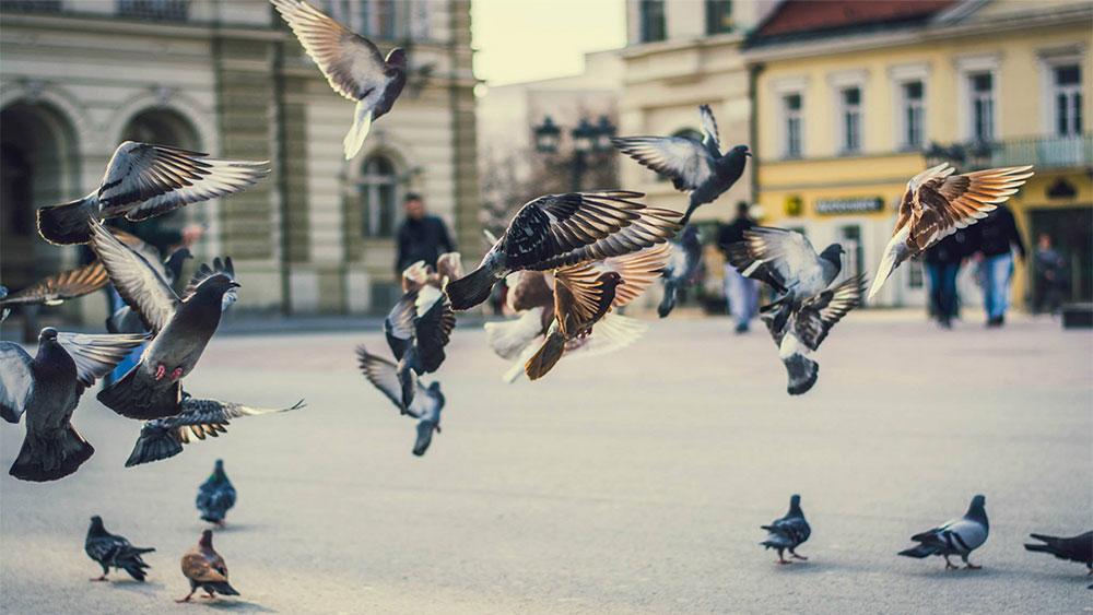 Novi Sad, foto: Ribar Gyula