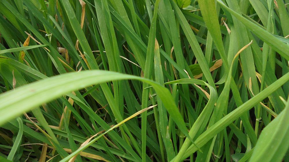 Grassroot, foto: Slavica Miletić