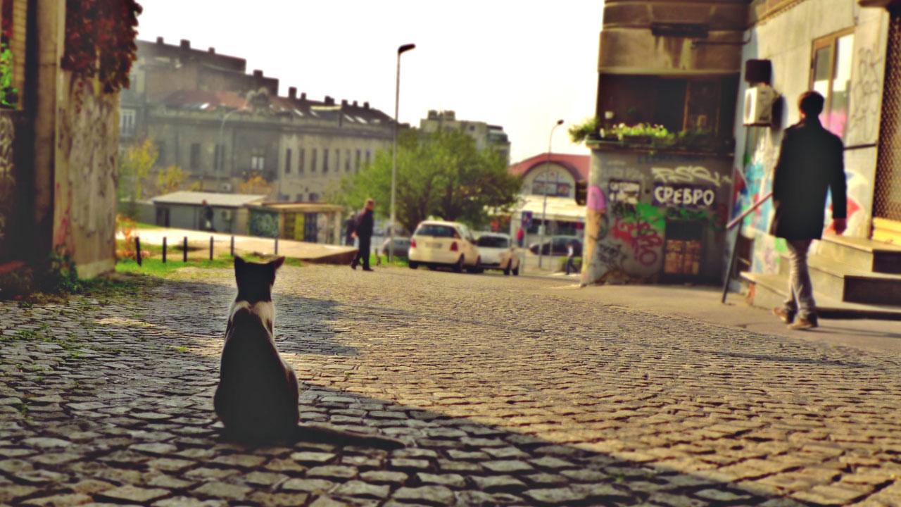 Beograd, foto: Predrag Trokicić