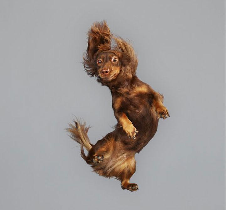 Leteći psi Julie Christe