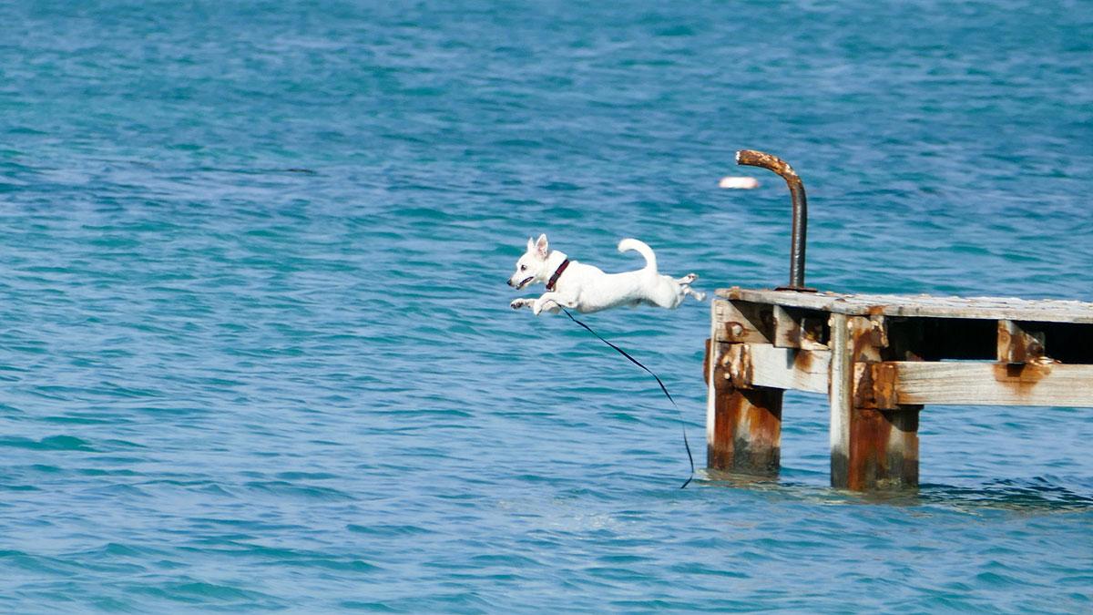 pas koji skače u vodu