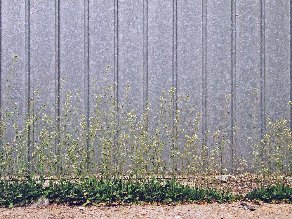 metalna ograda ispod koje raste cveće