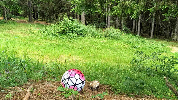 Lopta u šumi