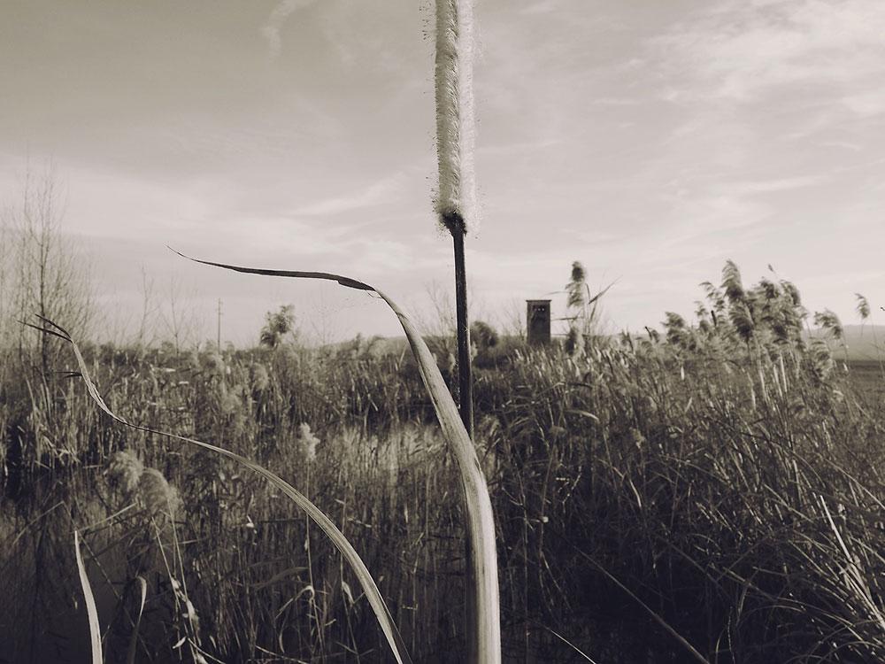 polje zaraslo u travu