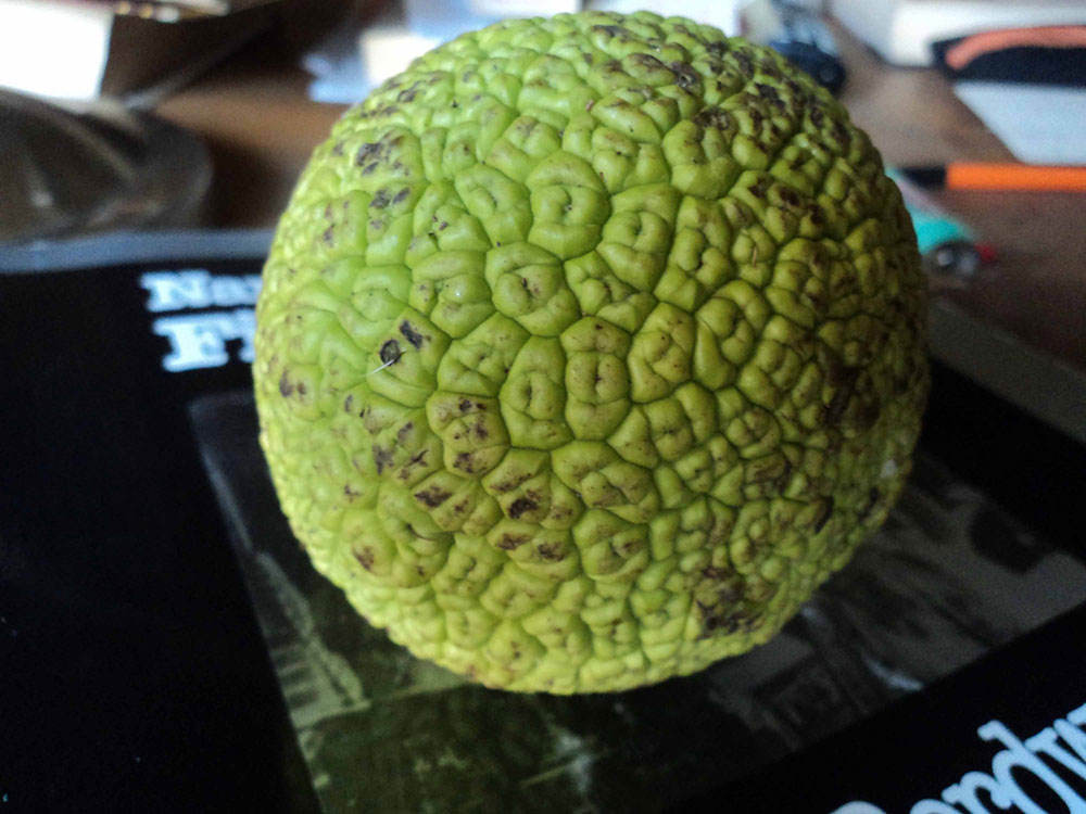 Zeleni mozak