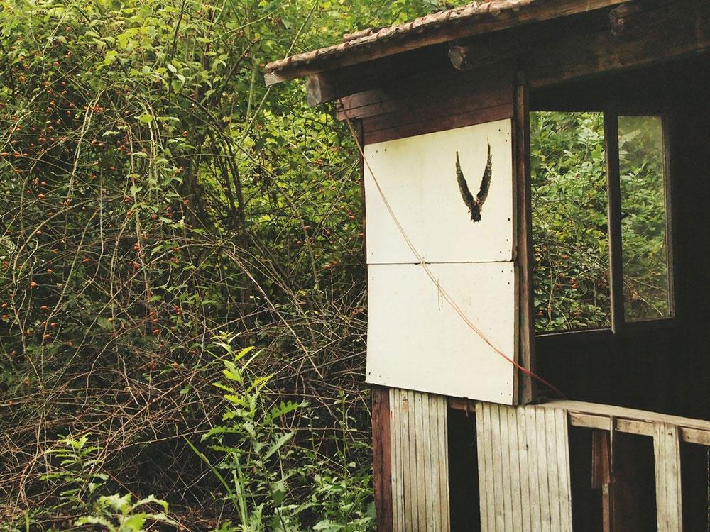 napuštena brvnara u šumi