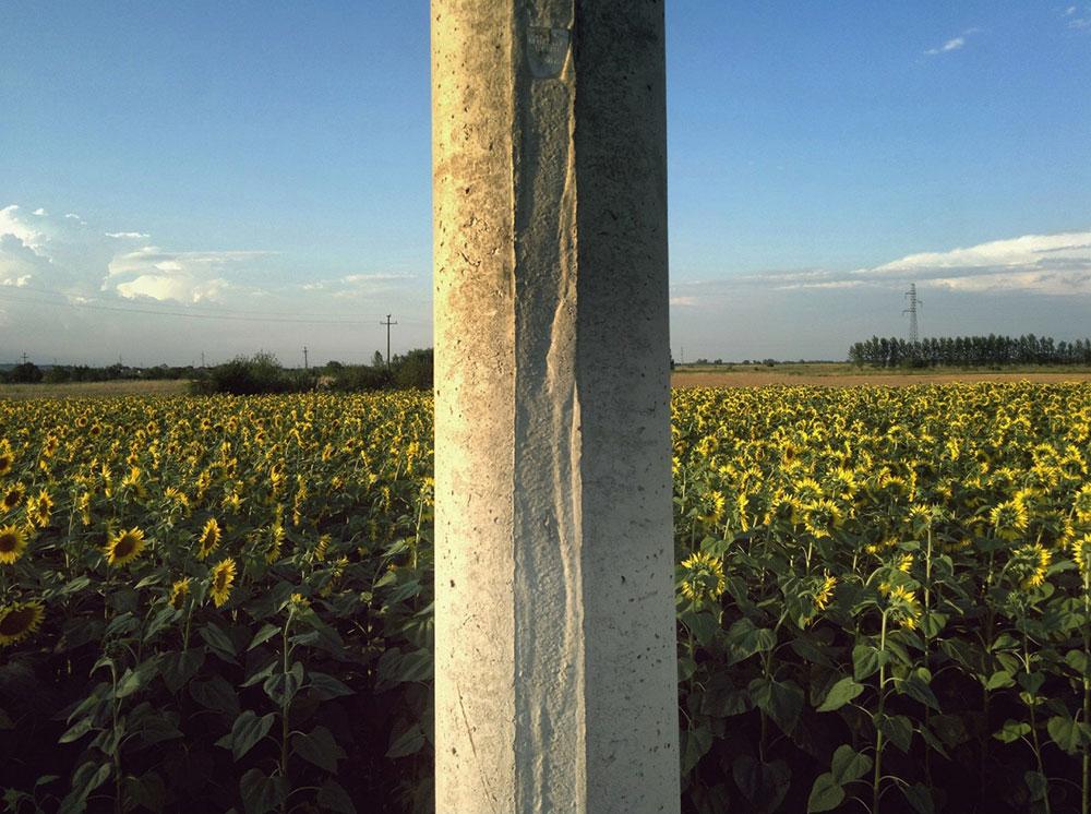 betonska bandera u polju suncokreta