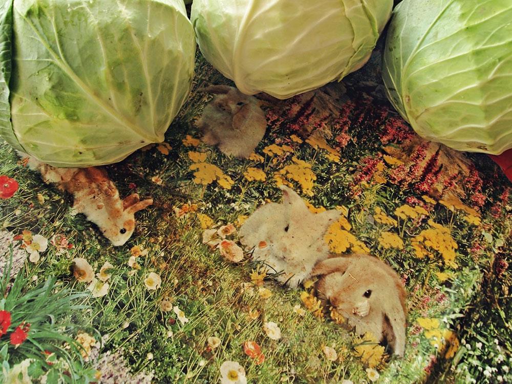 glavice kupusa na plastičnoj mušemi sa zečićima