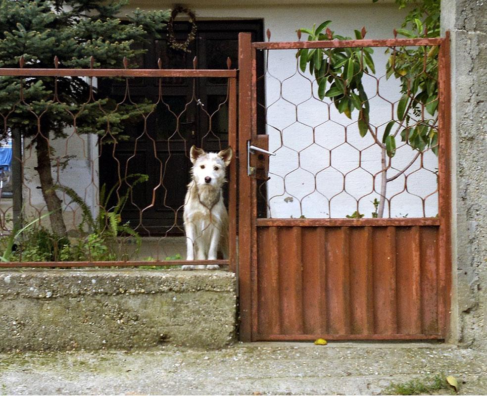 pas iza kućne ograde