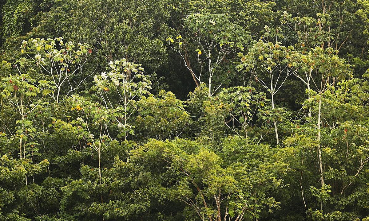 Amazonska kišna šuma u Brazilu
