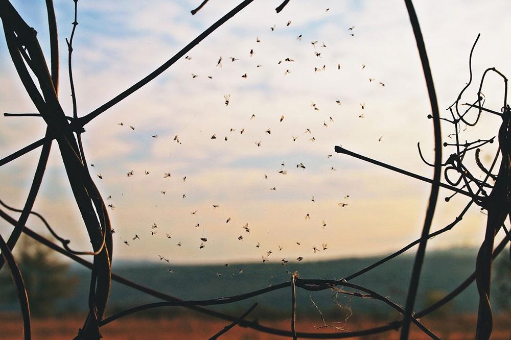 Paučina u kojoj su uhvaćene mušice