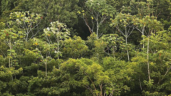 amazonske sume