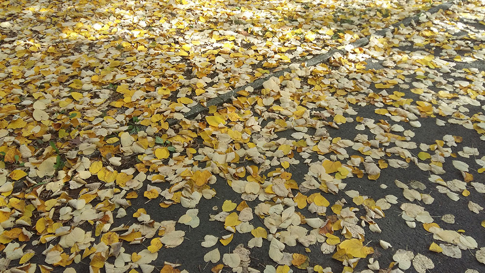 opalo jesenje lišće