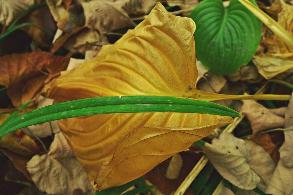 suvo lišće