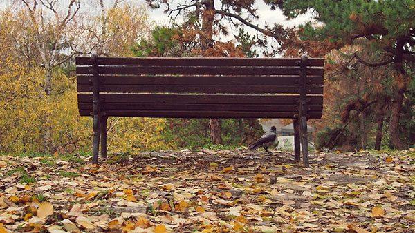 klupa u parku