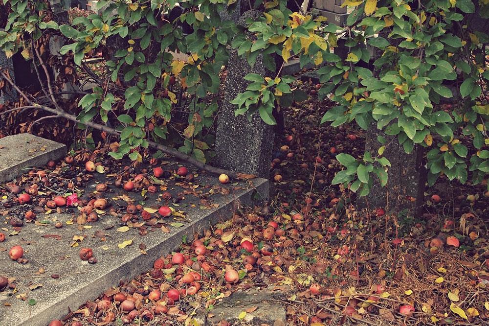 opale i trule jabuke