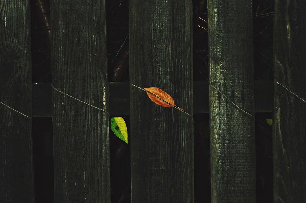 crna taraba