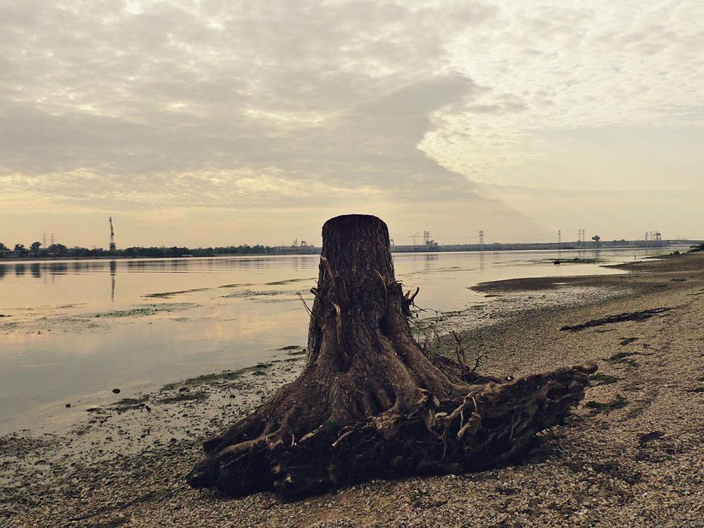 iščupani panj sa korenom na obali reke