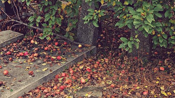 trule jabuke