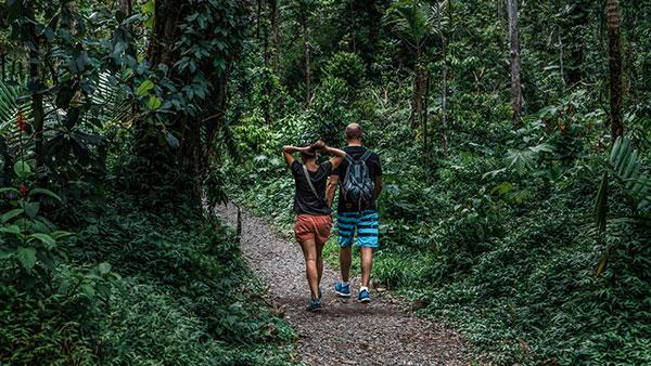 Prašuma El Junke u Portoriku